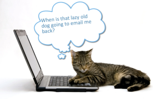 Cat waiting on lazy dog to email back