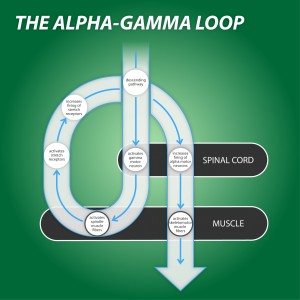 Alpha Gamma Loop for Somatics Exercises