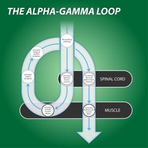 Alpha Gamma Loop for Somatics Exercises