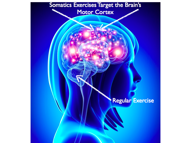 Somatics Exercises Target the Brain's Motor Cortex.019