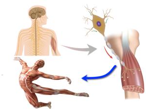 Reprogram Brain & Body