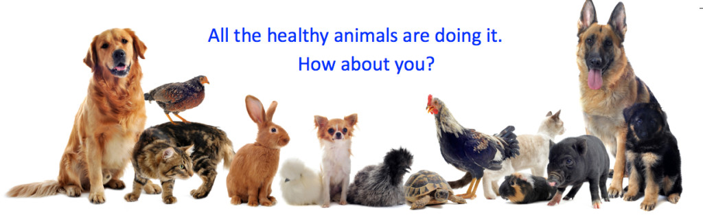 All the Healthy Animals are Doing It.  How about you?  Ready to Move Like an Animal!