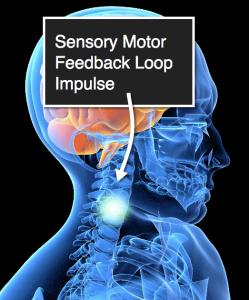 Sensory Motor Feedback Loop
