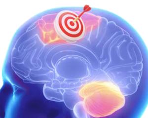 Target Brain's Cortex
