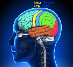 motor-sensory-strip