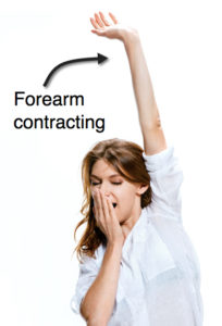 Forearm contracting as part of a yawning pandiculation