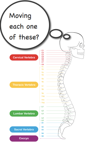 Moving each one of these spinal joints