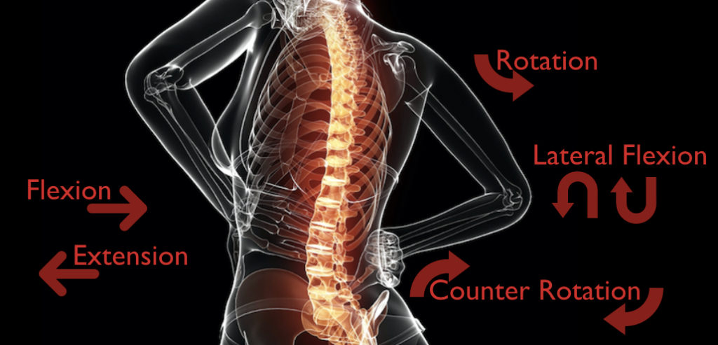 Ways to Move the Spine Consciously