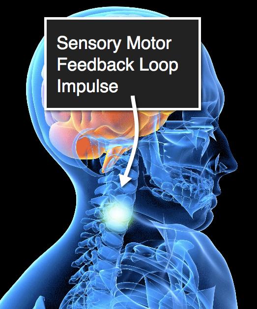 Somatics Coordination Exercise - Sensory Motor Feedback Loop