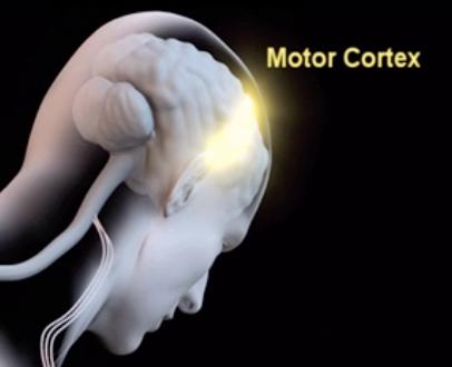 Sensory Motor Amnesia