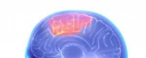 Higher Brain Level